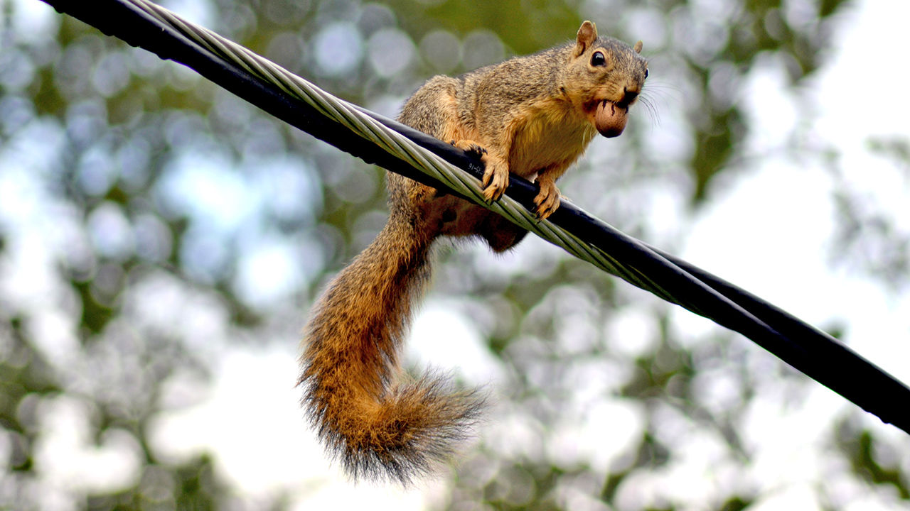 Of all the animals that cause us problems, squirrels are the No. 1 troublemaker.
